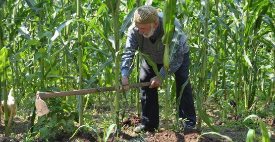 104 yaşındaki Mustafa dede gençlere taş çıkartıyor
