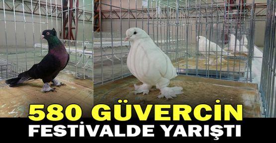 580 güvercin festivalde yarıştı