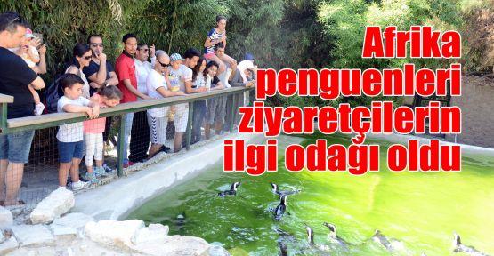 Afrika penguenleri ziyaretçilerin ilgi odağı oldu