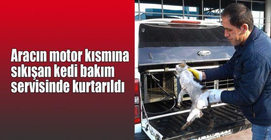 Aracın motor kısmına sıkışan kedi bakım servisinde kurtarıldı