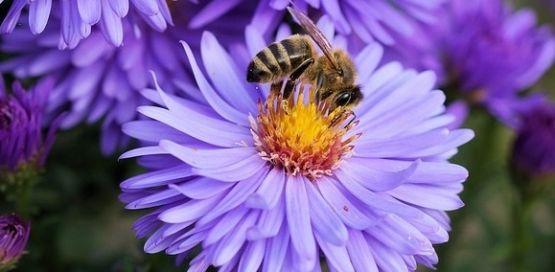 'Arılar uçan eczacı ve doktorlardır'