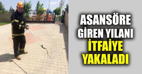 Asansöre giren yılanı itfaiye ekipleri yakaladı