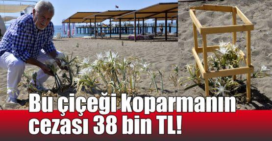 Bu çiçeği koparmanın cezası 38 bin TL!