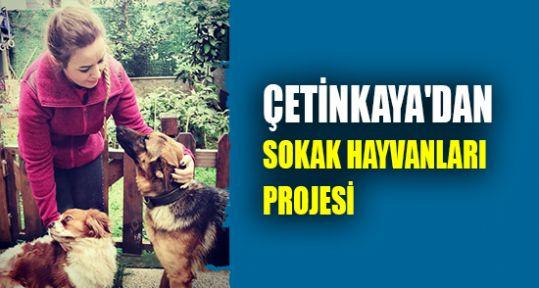 Çetinkaya'dan sokak hayvanları projesi