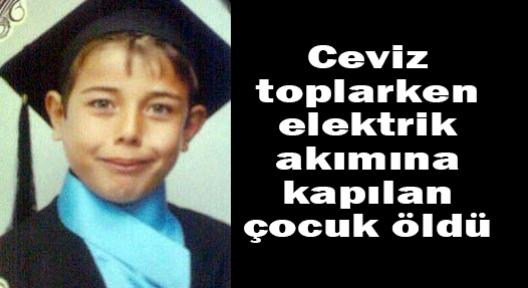 Ceviz toplarken elektrik akımına kapılan çocuk öldü