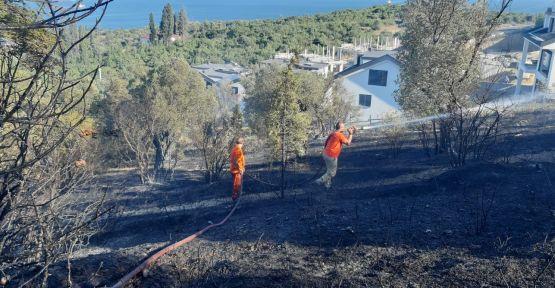 Darıca'da 20 dönümlük zeytinlikte yangın çıktı