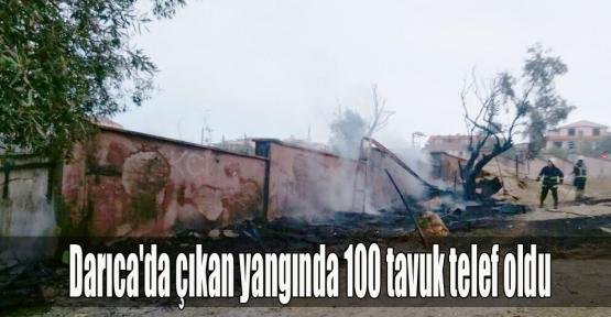 Darıca'da çıkan yangında 100 tavuk telef oldu