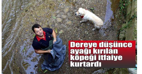 Dereye düşünce ayağı kırılan köpeği itfaiye kurtardı