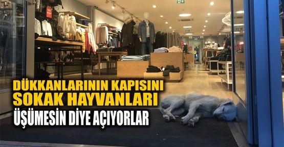 Dükkanlarının kapısını sokak hayvanları için açıyorlar