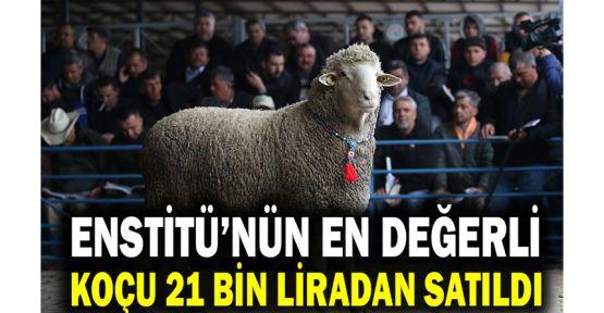 Enstitü'nün en değerli koçu 21 bin liradan satıldı