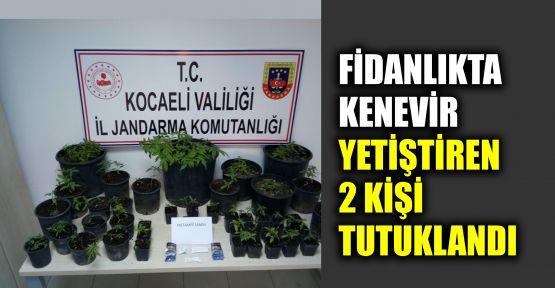 Fidanlıkta kenevir yetiştiren 2 kişi tutuklandı