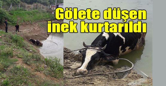 Gölete düşen inek kurtarıldı
