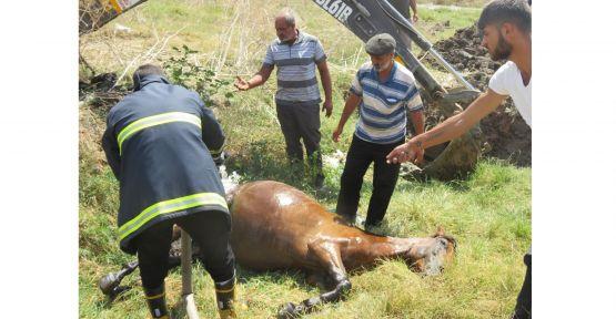 Kanalizasyon çukuruna düşen at kurtarıldı