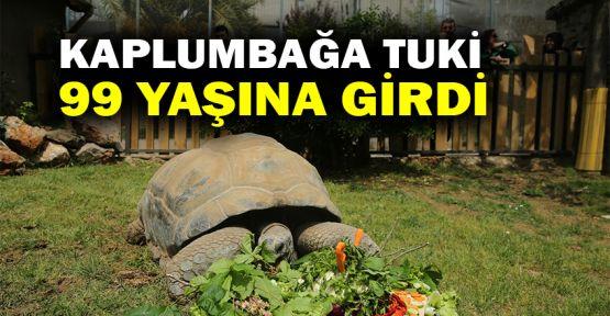 Kaplumbağa Tuki 99 yaşına girdi