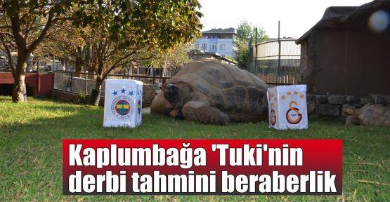 Kaplumbağa 'Tuki'nin derbi tahmini beraberlik