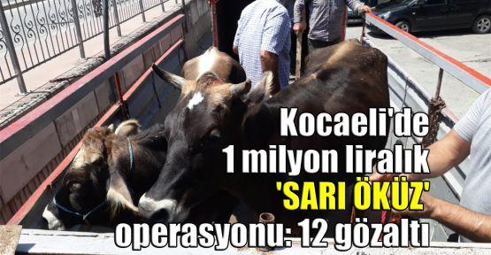 Kocaeli'de 1 milyon liralık 'Sarı Öküz' operasyonu: 12 gözaltı