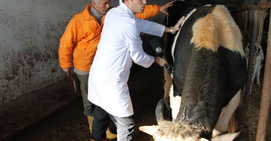 Kocaeli'de hayvancılık sektöründe yüzde yüz artış var