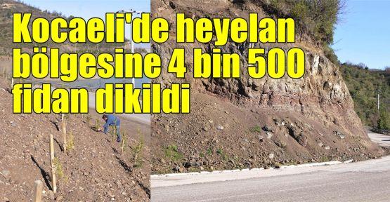 Kocaeli'de heyelan bölgesine 4 bin 500 fidan dikildi