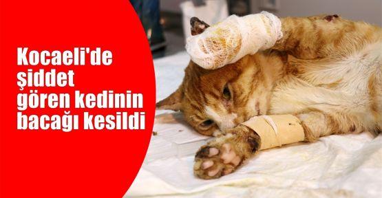 Kocaeli'de şiddet gören kedinin bacağı kesildi