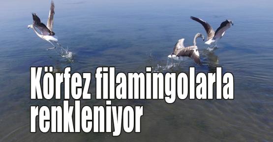 Körfez filamingolarla renkleniyor