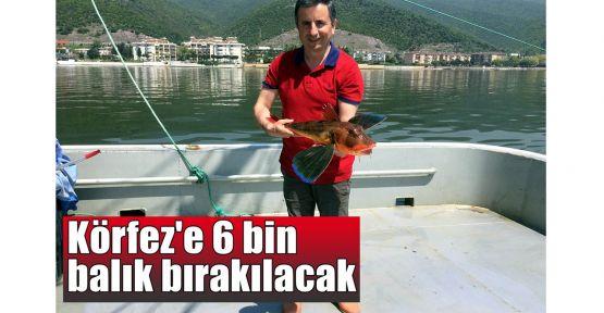 Körfeze 6 Bin balık bırakılacak