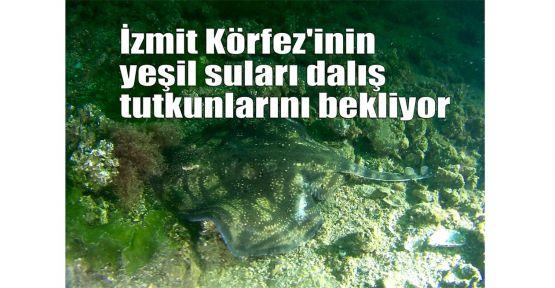 Körfez'in yeşil suları dalış tutkunlarını bekliyor