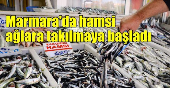 Marmara'da hamsi ağlara takılmaya başladı