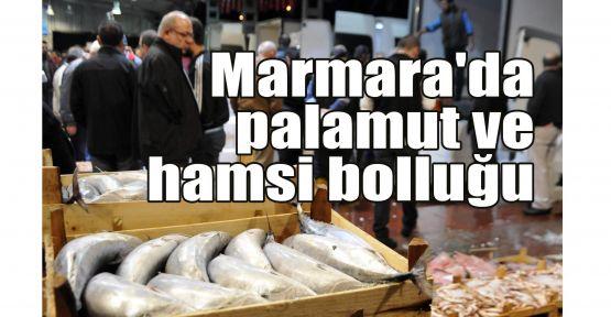 Marmara'da palamut ve hamsi bolluğu