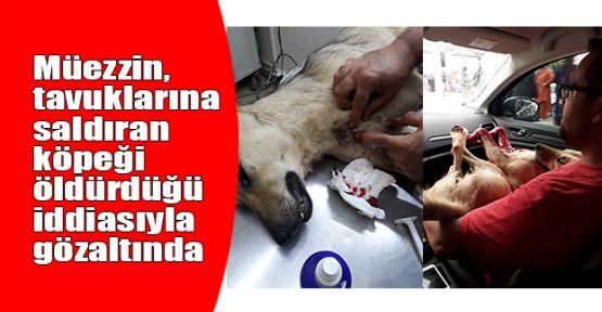 Müezzin, tavuklarına saldıran köpeği öldürdüğü iddiasıyla gözaltında