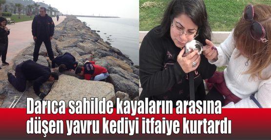 Sahilde kayaların arasına düşen yavru kediyi itfaiye kurtardı