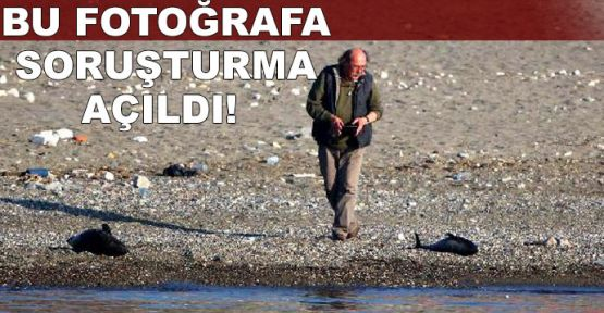 Silahla yunusları vuran balıkçılar profesöre yakalandı