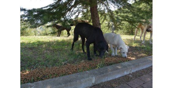 İzmit Belediyesi'nden sokak hayvanlarına 150 kilo mama