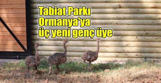 Tabiat Parkı Ormanya'ya üç yeni genç üye