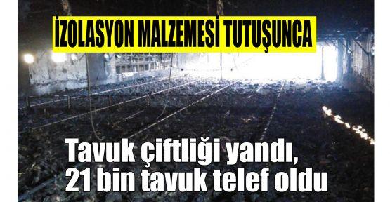 Tavuk çiftliği yandı, 21 bin tavuk telef oldu