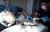 Yaralı kuşlar tedavi edilip doğal yaşama bırakılıyor