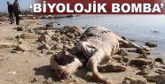 'Biyolojik bomba'