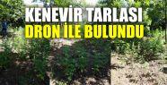 Karamürsel'de kenevir tarlaları drone...