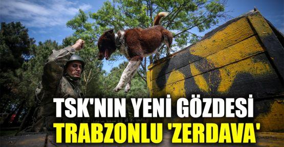 TSK'nin yeni gözdesi Trabzonlu 'Zerdava'