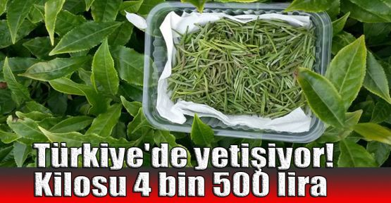 Türkiye'de yetişiyor! Kilosu 4500 lira