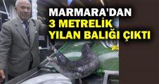 Marmara'dan 3 metrelik yılan balığı çıktı