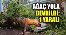Kocaeli'de ağaç yola devrildi: 1 yaralı