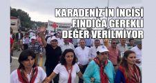 Tarhan: Karadeniz'in incisi fındığa gerekli değer verilmiyor