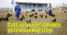 Çiftçiye yüzde 50 hibeli gezen tavuk desteği