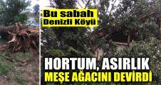 Denizli köyünde hortum, asırlık meşe ağacını devirdi