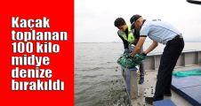 Kaçak toplanan 100 kilo midye denize bırakıldı