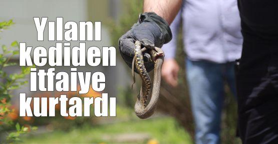 Yılanı kediden itfaiye kurtardı