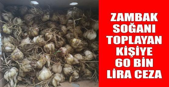 Zambak soğanı toplayan kişiye 60 bin lira ceza