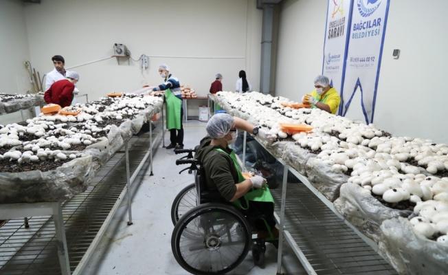Bağcılar'da engelliler bir yılda 1,5 ton mantar hasat etmeyi hedefliyor