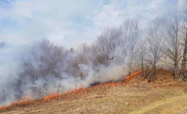Bursa'da orman yangınında 5 hektarlık alan zarar gördü