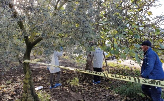 Gemlik'te erkek cesedi bulundu